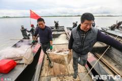 黑龙江上荡渔歌 船儿满江鱼满仓