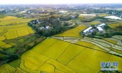 美丽中国丨丰收的田野