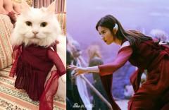 刘亦菲猫咪穿白纤楚同款 网友:脑洞太大了