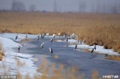 """双鸭山:中国""""最北""""湿地迎来今年首批候鸟(组图)"""