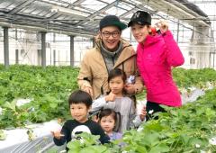 陈浩民夫妇带儿女日本摘草莓 一家五口幸福同框超温馨
