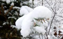 漠河四月迎来暴雪 雪深达8厘米(组图)