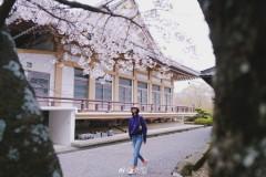 刘雯漫步樱花树下晒照 时尚活力浪漫清新展春意