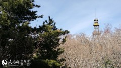 哈尔滨阿城区吊水壶风景区——全国最大的红叶观赏地(组图)