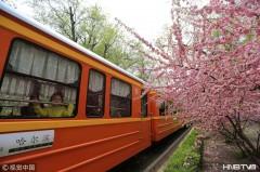 鲜花盛开形成隧道 小火车蜿蜒穿行美如画卷