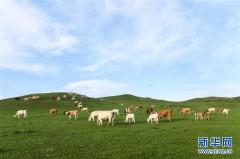 锡林郭勒草原夏日美景