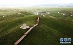 甘肅瑪曲:高原盛夏濕地美