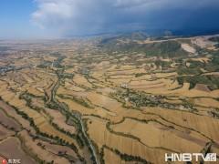 新疆奇台:天山麦海 美景如画