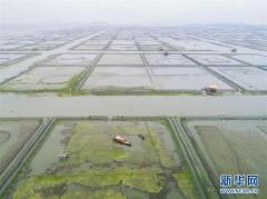 """太湖""""水上牧场""""开启丰收季"""