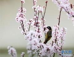 鳥語花香(組圖)