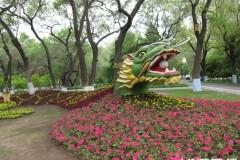 哈尔滨兆麟公园五色草组成腾飞的巨龙