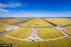 黑龙江:万亩水稻迎丰收(组图)
