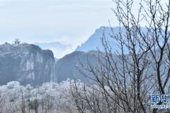 湖南张家界:雾凇景观美如画