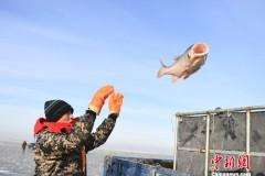 吉林查干湖上演冬日渔歌
