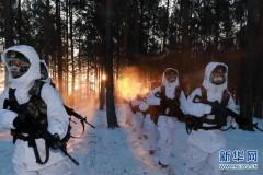 """北极哨兵:挺立在风雪中的""""北极杨""""(组图)"""