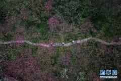 杭州西溪湿地:曲水寻梅 美不胜收