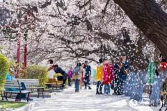 哈尔滨工程大学花开当季 春满校园(组图)