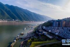 重庆长江岸线生态复绿初见成效