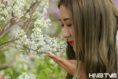 哈尔滨市花丁香绽放 一城春色满街幽香(组图)