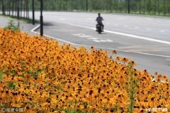 哈尔滨花海路连绵铺展成为新景观 游人驻足拍照(组图)