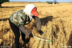 """黑龙江富锦""""家庭农场""""农业高质量发展迎丰收"""