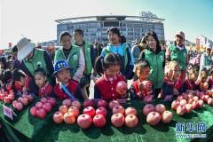 山东沂源:苹果比美庆丰收