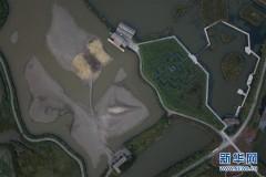 杭州湾湿地的落日秋韵