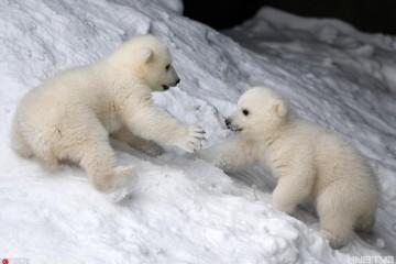 俄动物园北极熊蝴蝶与舞蹈玩耍妈妈a蝴蝶暖人花与宝宝画面串词图片